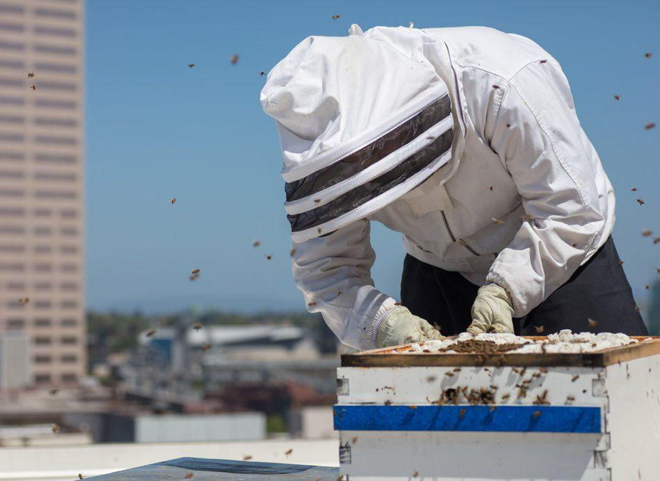 Città alleate delle api. Dal modello tedesco alla rete civica italiana