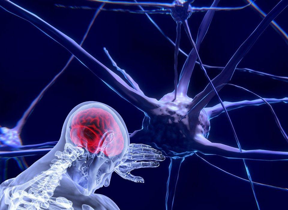Sistema nervoso: al via il secondo NeuroTech Day per promuovere la ricerca in neuroscienze e neuroriabilitazione